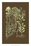 Organic Greenery III Giclee Print by Johann Wilhelm Weinmann