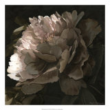 Moonlit Peony II Giclee Print by Megan Meagher