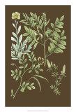 Organic Greenery II Giclee Print by Johann Wilhelm Weinmann