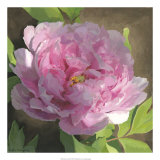 Peony in Pink II Giclee Print by Megan Meagher