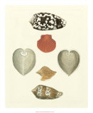 Knorr Shells III Giclee Print by George Wolfgang Knorr