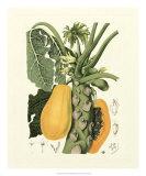 Island Fruits IV Reproduction procédé giclée par Berthe Hoola Van Nooten