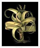 Dramatic Aloe I Giclee Print by Basilius Besler