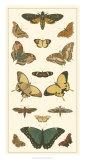 Cramer Butterfly Panel I Giclee Print by Pieter Cramer