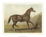 Cassell's Horse III Giclee Print by  Cassell