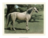 Cassell's Horse I Giclee Print by  Cassell