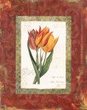 Tulip de Gesner Prints by Carol Robinson
