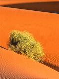 Dune et Herbe Poster by  Bilderteam