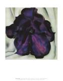 Purple Petunia Reprodukcje autor Georgia O'Keeffe