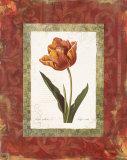 Tulipe Cultivee Print by Carol Robinson