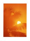 Orange Palms Posters