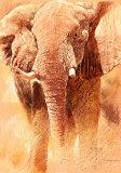 Elephant Study Art par Renato Casaro