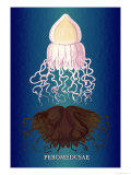 Jellyfish: Peromedusae Prints by Ernst Haeckel