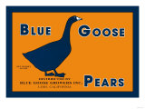 Blue Goose Pears Prints