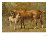 Thoroughbred Mare and Foal Posters by Samuel Sidney