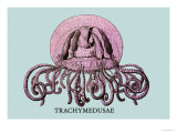 Jellyfish: Trachymedusae Sztuka autor Ernst Haeckel