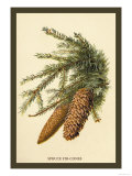 The Spruce Fir-Cones Posters by W.h.j. Boot