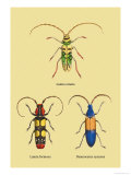 Beetles: Lamia Ornata, L. Formosa and Desmocerus Cyaneus Posters by Sir William Jardine