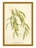 Leaves of the Willow Prints by W.h.j. Boot