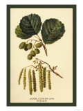 Alder, Catkins and Foliage Prints by W.h.j. Boot