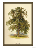 Ash Tree Prints by W.h.j. Boot