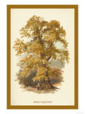Sweet Chestnut Prints by W.h.j. Boot