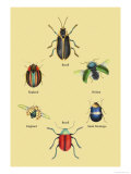 Beetles of Brazil, Britain, England and Saint Domingo Print by Sir William Jardine