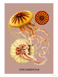 Jellyfish: Discomedusae Plakat autor Ernst Haeckel