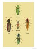South American Beetles Posters by Sir William Jardine