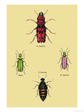 Beetles from North and South America and Spain Posters by Sir William Jardine