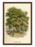 Walnut Tree Prints by W.h.j. Boot