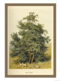 Box Tree Print by W.h.j. Boot