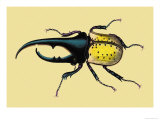 Horned Beetle Prints by Sir William Jardine