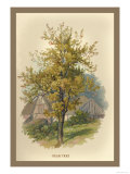 Pear Tree Print by W.h.j. Boot