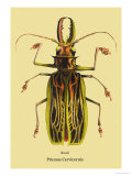 Beetle: Brazilian Prionus Cervicornis Prints by Sir William Jardine