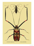 Beetles: Acrocinus Longimanus and Lamia Subocellata Posters by Sir William Jardine