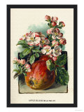 Apple Blossom and Fruit Print by W.h.j. Boot