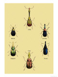 Beetles from Around the World Prints by Sir William Jardine