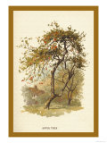 Apple Tree, Giclee Print