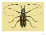 Beetle: Lamia Tricincta Poster av Sir William Jardine