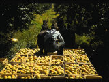 Hauling Crates of Peaches Photo by Russell Lee
