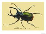 Beetle: Scarabaeus Atlas of Java Plakat av Sir William Jardine
