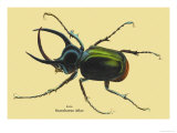 Beetle: Scarabaeus Atlas of Java Poster by Sir William Jardine