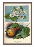 The Pear-Blossom Pear Posters by W.h.j. Boot