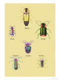 Beetles of America, Britain, Brazil, England and Europe Prints by Sir William Jardine