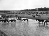 Horses Crossing the River at Round-Up Camp Photo by L.a. Huffman