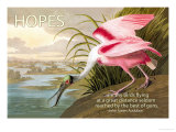 Hopes Are Shy Birds Poster by John James Audubon