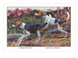 English Foxhound and American Foxhound Posters by Louis Agassiz Fuertes