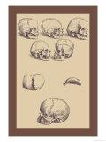 Totenköpfe Poster von Andreas Vesalius