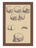 Skulls Prints by Andreas Vesalius